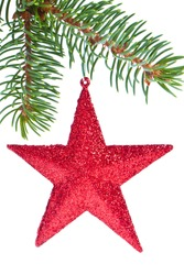 red christmas star hanging from tree isolated on white background