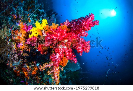 Red color coral in underwater scene. Beautiful coral underwater. Undersea coral underwater. Underwater coral view