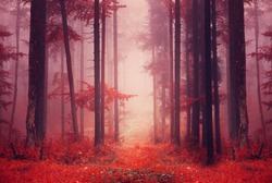 Red color saturated foggy fantasy forest scene with path. Filter color effect used.