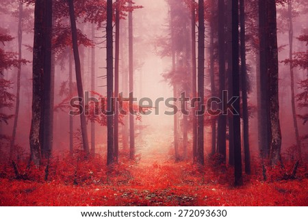 red color saturated foggy...