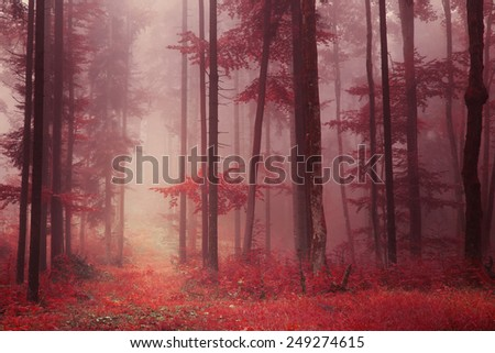 Red colored foggy fantasy forest scene with path. Filter color effect used. & Red colored foggy fantasy forest scene with path. Filter color ...