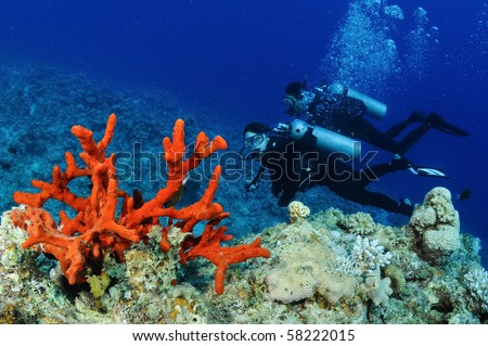 red coral and scuba divers