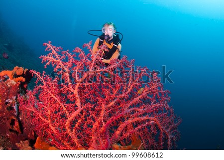 Red corals with a female diver in the background, on a reef at Bali, Indonesia