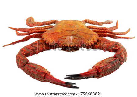 Photo of  Red crab isolated on white background , Cooked crab