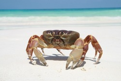 red crab on beautiful beach surface travel landscape clean white sand and blue sea water wave ripple background ,Tachai island, Similan group, Phang nga near Phuket, Thailand