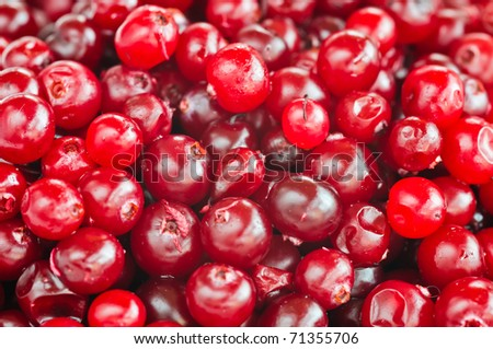 red cranberries close-up  with selective focus