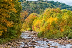 Red Creek river near Dolly Sods, West Virginia with colorful autumn fall yellow orange tree foliage at Canaan valley Appalachian mountains