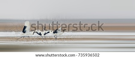 Shutterstock Red-crowned Crane