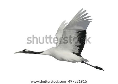 Shutterstock Red-crowned crane,  Japanese crane, Grus japonensis, single bird in flight,  Japan