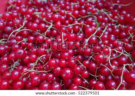 Red currant #522379501