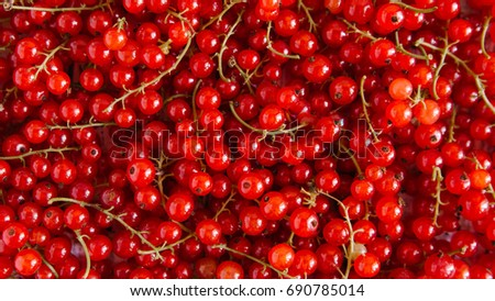 red currant #690785014