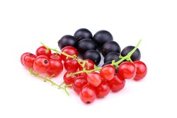 Red currant and black currant isolated on a white background. Ribes nigrum and Ribes rubrum isolated. Healthy food. Ripe berries.