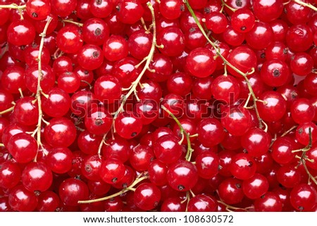 red currant berries #108630572
