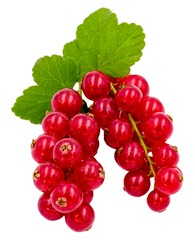 Red currant fruits bunch with red berries and green leaves isolated on white background.