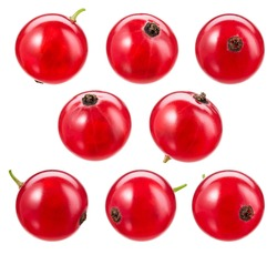 Red currant isolated. Currant red on white background. Currant red isolated. Currants on white.  With clipping path.