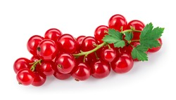 Red currant isolated. Currant red on white background. Currants on branch. with leaves. Top view. Clipping path.