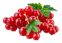 Red currant isolated. Currant red with leaves on white background. Currants on white. Red currant on branch. Clipping path.