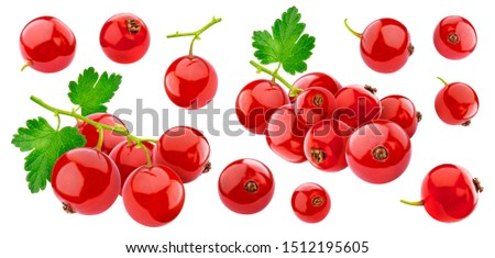 Red currant isolated on white background with clipping path, collection. Redcurrant collection with leaves