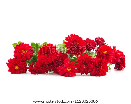 Red dahlias are lying on the table #1128025886