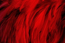 red dark color feather texture background