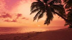 Red dawn on palm isle beach. Seascape dawn over sea. Orange clouds in red sky Sun dawn on palms beach background. Atlantic ocean nature landscape. Dominican Republic beach sun dawn. Sea shore seascape