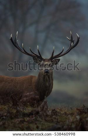 Red Deer #538460998