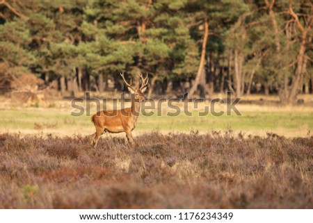 Red Deer in the Forest #1176234349