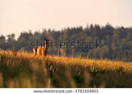Red deer in the grass. Deer in the forest. Deer in the woods