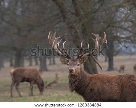 red deer in the wild #1280384884