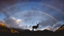 Red Deer Stag in Glencoe Scottish Highlands Scotland silhouette with a double rainbow in the sky above.