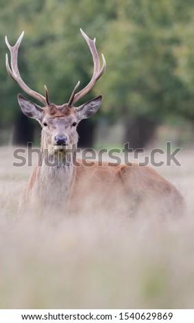 Red Deer Stag Rutting Season #1540629869