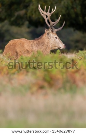 Red Deer Stag Rutting Season #1540629899
