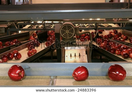 Red Delicious Apples on conveyor belt in fruit packing warehouse
