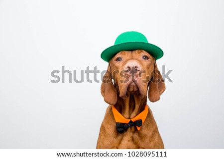 Red dog in a green hat and bow tie congratulates with St. Patrick's Day