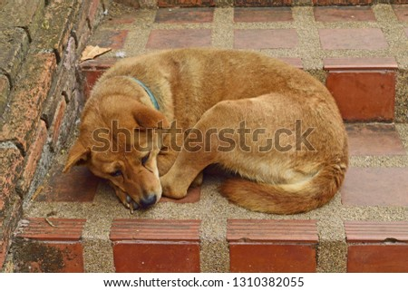 Red dog sleeping on red brick #1310382055