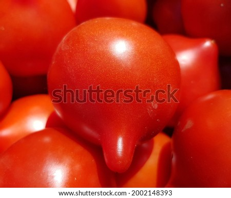 Red early ripe rounded 'Prima Donna' tomatoes with a long nose in the sun (top view, texture). Stockfoto ©