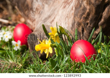 Red Easter eggs in the garden- selective focus on the front egg