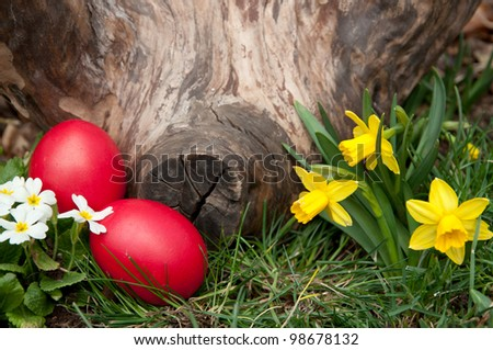Red eggs in the grass, near a log.