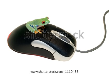 Red Eyed Tree Frog on Computer Mouse