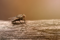 Red eyes of the fly,closeup
