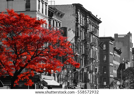 Stock Photo Red fall tree in black and white NYC street scene on 2nd Avenue in the East Village of Manhattan, New York City