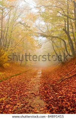 red fallen leaves in a autumn forest