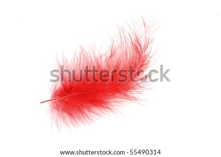 Red feather over white background