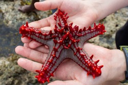 red five-pointed starfish in hand