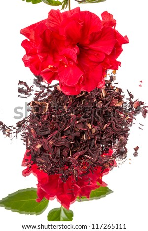 Red flower and green tea hibiscus. Isolated on white background with reflection