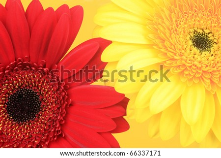 Red flower and yellow flower