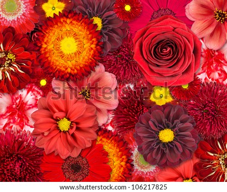 Red Flower Background. Selection of Various Isolated Red Flowers. Set of  Dahlia, Gerbera, Daisy, Carnation, Rose, Zinnia Flowers