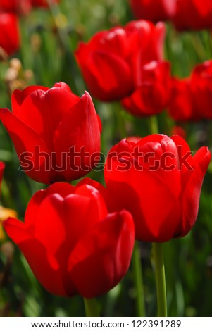 Red flower blossom during the sunny summer