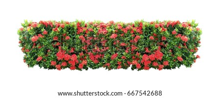 red flower bush Tree isolated with clipping path #667542688