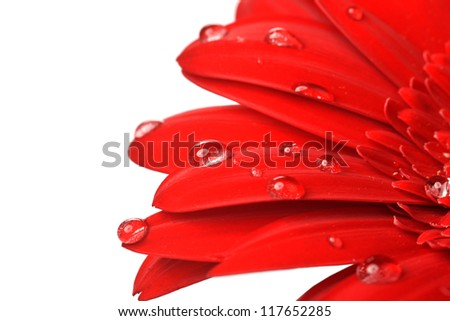 Stock Photo red flower close up  background